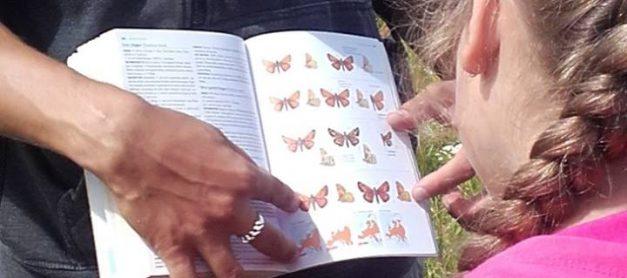Mācāmies atpazīt tauriņus